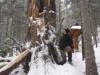 Padła matka bieszczadzkiego lasu
