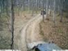 Fotopułapki pomagają wykryć sprawców leśnych wykroczeń